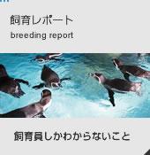 飼育レポート breeding report 飼育員しかわからないこと